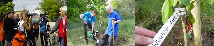Leiste_Baumpflanzung